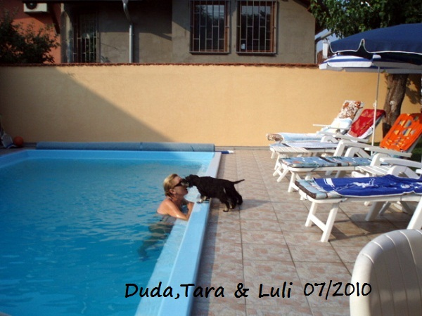 components/com_spgm/spgm/gal/My_dogs/Duda%2CTara%20and%20Luli.jpg